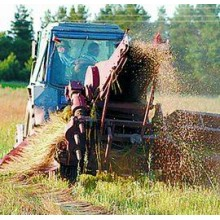 Лён долгунец. Технология выращивания и уборки льна. ВИДЕО