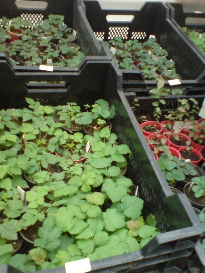 Питомники рассады и растений 163
